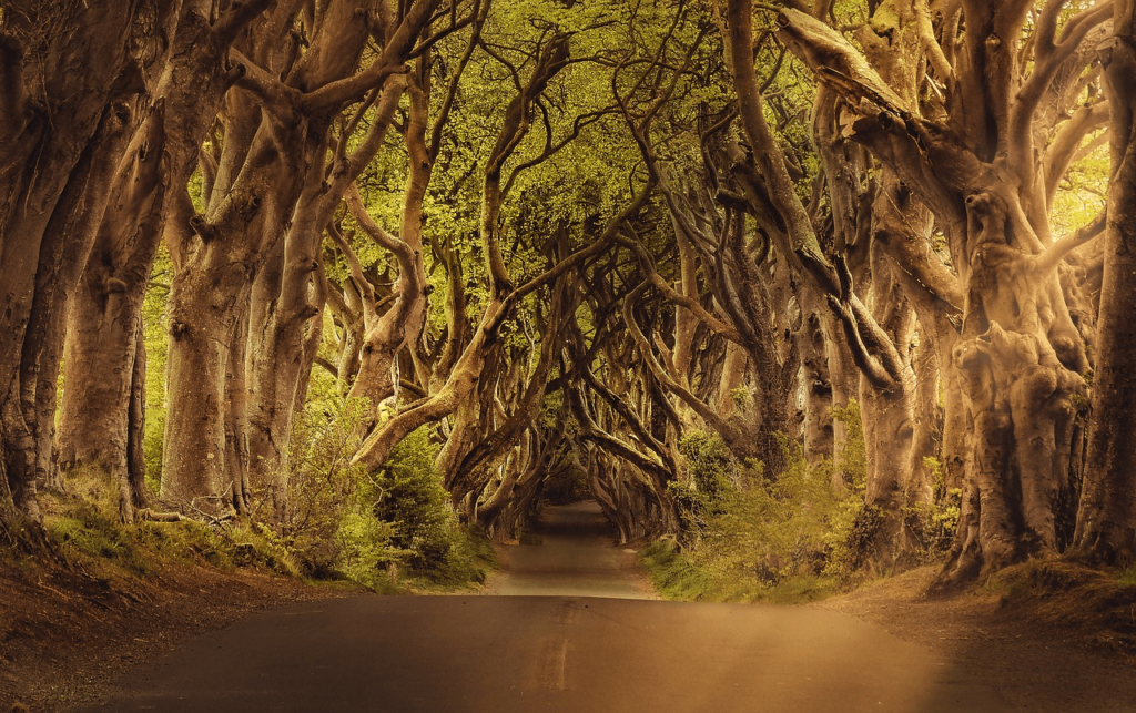 Dark Hedges, Northern Ireland - Creepy Places to Travel