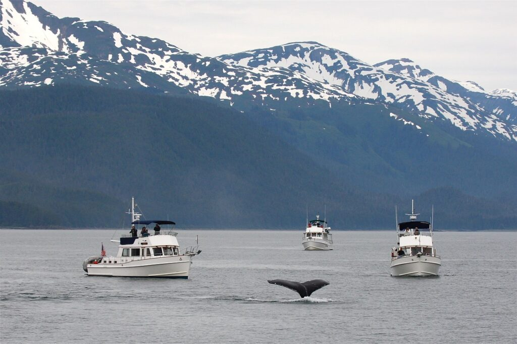 Whale Watching in Alaska - North American Adventures