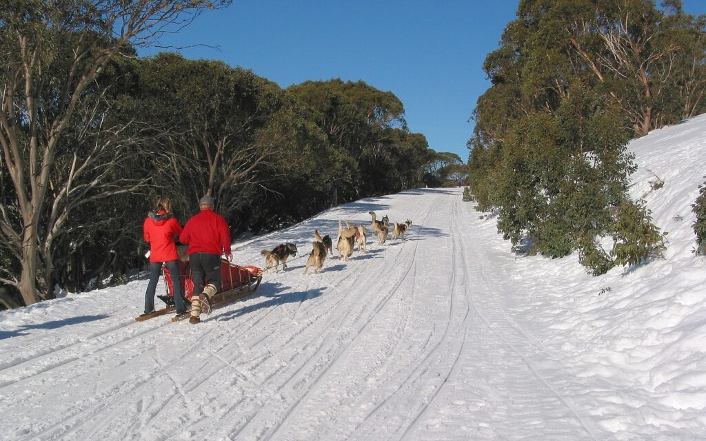 Dog Sledding in Falls Creek, Victoria