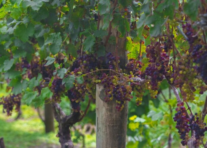 Eight Things You Didn't Know About New Zealand Wine