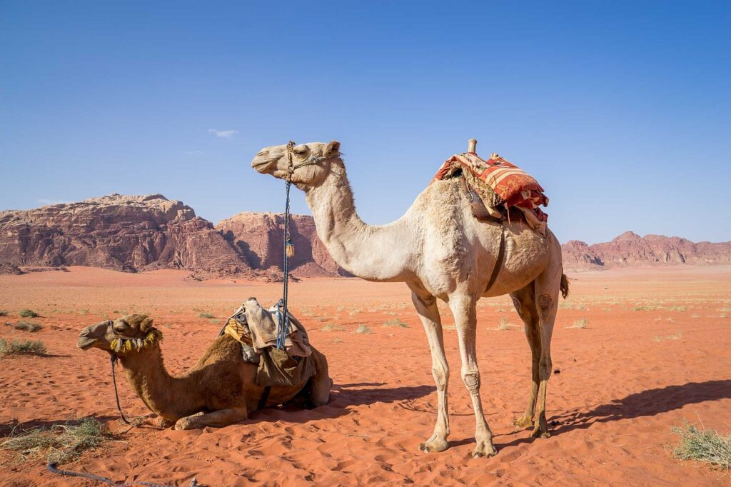 Camels in Wadi Rum via Pixabay Activities in Jordan