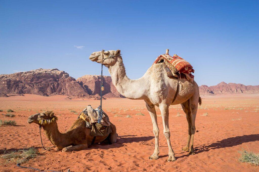 Camels in Wadi Rum via Pixabay Activities in Jordan