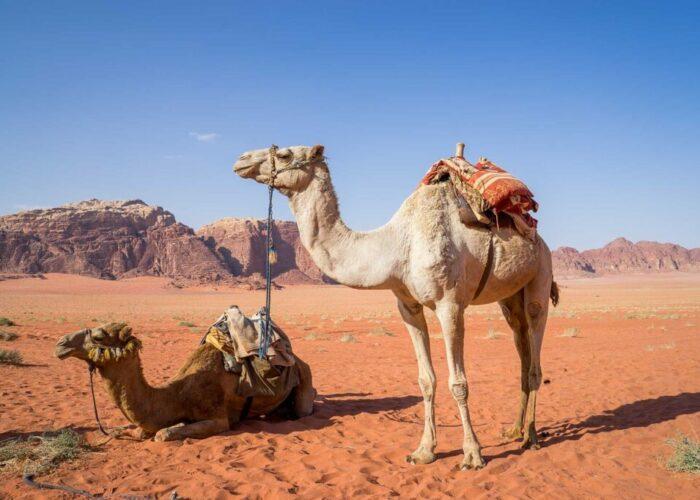 Beyond Petra: 4 Amazing Activities in Jordan