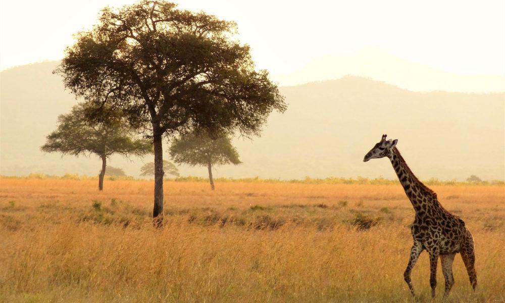 africa-1979220_1280 copy